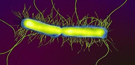 Microbiote: des bactéries qui nous veulent du bien | mikrobiologija | Scoop.it