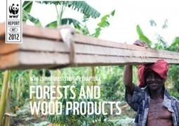 Ecosystems at Risk as Demand for Wood Products Soars Worldwide ...   Ecosystems at risk   Scoop.it