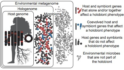 Getting the hologenome concept right: An eco-evolutionary framework for hosts and their microbiomes | MycorWeb Plant-Microbe Interactions | Scoop.it