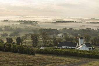 Virginia wines: How a few vineyards are putting the state on the fine-winery map - New Haven Register | Wine Time | Scoop.it