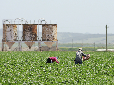 FDA Releases Rules To Strengthen Safety Of Food Supply : NPR | A Better Food System | Scoop.it