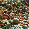 Food Waste As Such