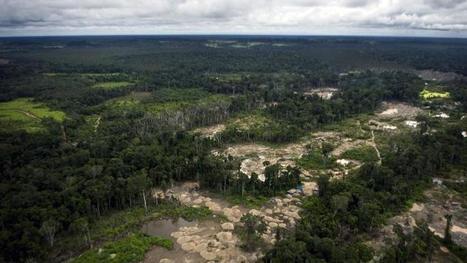 L'Amazonie grignotée par la ruée vers l'or clandestine | Biodiversité & Relations Homme - Nature - Environnement : Un Scoop.it du Muséum de Toulouse | Scoop.it
