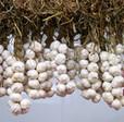 Ecopousse - L'encyclopédie du jardin, potager et de la ferme, conseils et fiches | Potager & Jardin | Scoop.it
