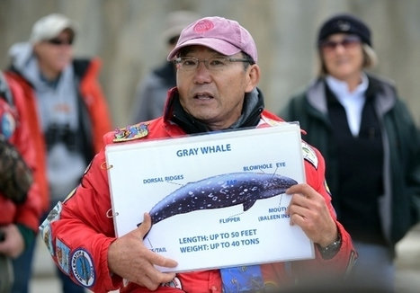 Whale watchers get ready as Pacific gray migration begins | All about water, the oceans, environmental issues | Scoop.it