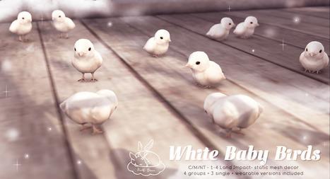 +Half-Deer+ White Baby Birds - for FLF | 亗 Second Life Home & Decor 亗 | Scoop.it
