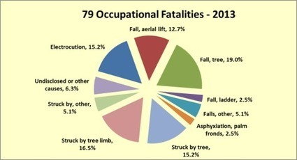 Occupational Tree Care Accidents in 2013 | Tree Care Industry Association | OHS - Occupational Accident Investigation | Scoop.it