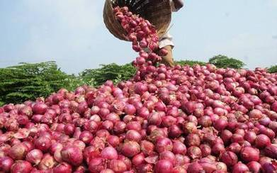 Onion crops tripled in Takhar | U.S. - Afghanistan Partnership | Scoop.it