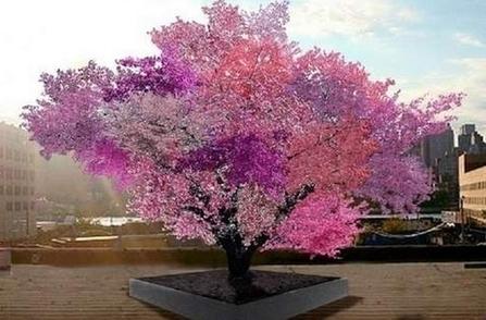 INCROYABLE : Cet arbre est capable de produire 40 types de fruits différents ! | Ca m'interpelle... | Scoop.it
