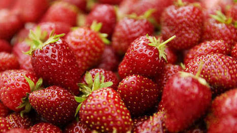 La fraise de Wépion déjà en vente - 7sur7   INFO ECONOMIE   Scoop.it