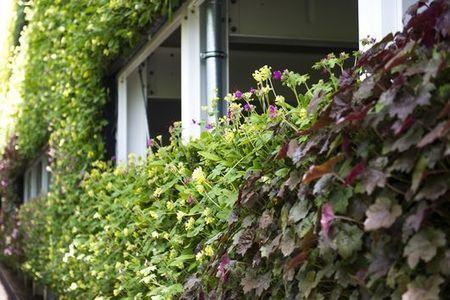 UK's National Grid claims largest living wall in Europe | Sustainable Futures | Scoop.it