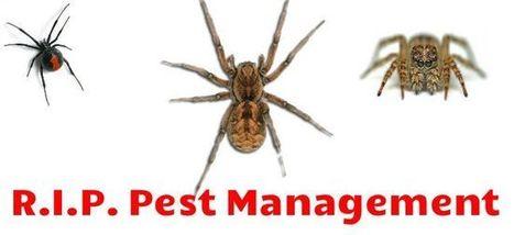 Spiders are Lurking-Beware of Them | R.I.P. Pest Management | Pest Exterminator Northern Beaches | Scoop.it