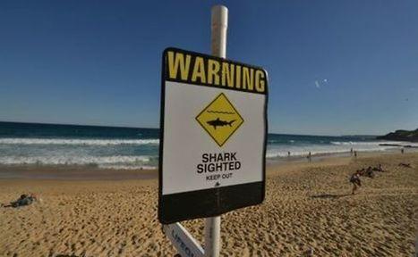 Australie: Un nageur blessé par un requin | ça m'intéresse! | Scoop.it