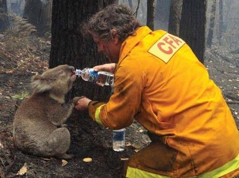 Twitter / ThatsEarth: A firefighter giving water ... | My Funny Africa.. Bushwhacker anecdotes | Scoop.it