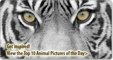 Inspirational Photo Stories - Great Photography to Inform and Inspire You!   Story Route   Scoop.it