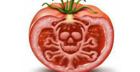 Monsanto GMO crops are about to invade European farms.   GMOs & FOOD, WATER & SOIL MATTERS   Scoop.it