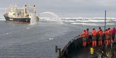 Les baleiniers japonais voguent vers l'Antarctique   La vie de la cité   Scoop.it