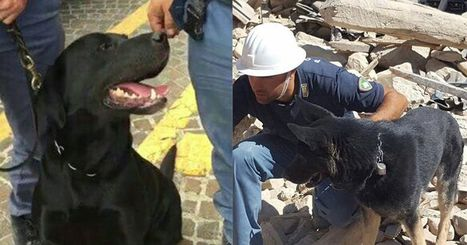 Hero dogs save children from Italy earthquake rubble | @FoodMeditations Time | Scoop.it