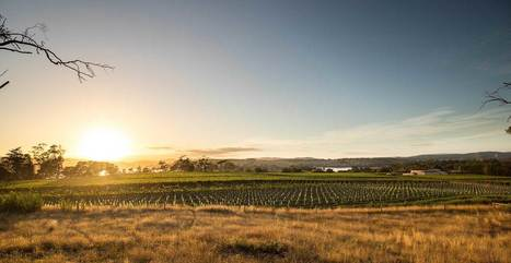 Holm Oak Vineyards | Pinot Post | Scoop.it