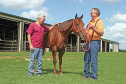 America's Horse: Off the Injured List | Laminitis News | Scoop.it