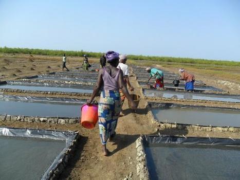 Du sel solaire pour lutter contre le déboisement en Guinée-Conakry   Confidences Canopéennes   Scoop.it