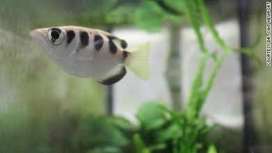#Fish can recognize human faces, study shows #biology #science | Limitless learning Universe | Scoop.it