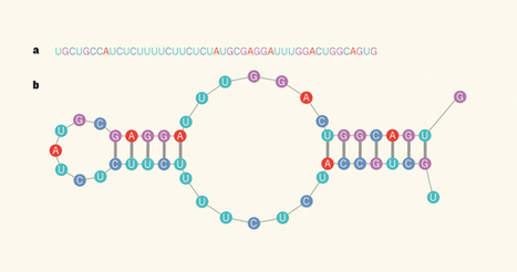 Molecular biology: A second layer of information in RNA | Systems | Scoop.it