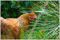 Patent troll Lodsys chickens out, folds case rather than face Kaspersky Lab (Joe Mullin/Ars Technica) | Digital-News on Scoop.it today | Scoop.it