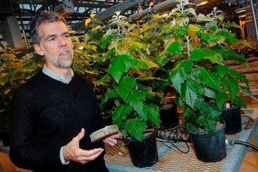 Des arbres génétiquement modifiés près de Québec | EntomoNews | Scoop.it