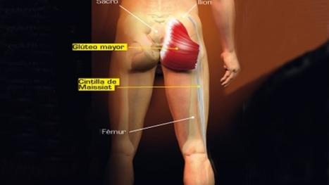 Estiramientos para los glúteos | Mecano Humano | Sportlife.es | Fitnessclub Mujer | Scoop.it