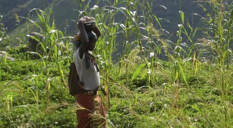 Cette technique agricole vieille de 700 ans qui pourrait permettre à l'Afrique de nourrir sa population sans pesticides et malgré le dérèglement climatique   Innovations francophones   Scoop.it