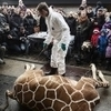 Culling animals for conservation fails the morality test   Marius   Scoop.it