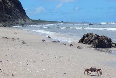 Biodiversité : une île dévastée, Trindade, se repeuple lentement | Farming, Forests, Water, Fishing and Environment | Scoop.it
