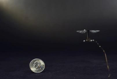 [Vidéo] Le plus petit robot volant du monde créé par des chercheurs de Harvard | projet.SF | Scoop.it
