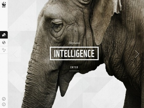 WWF Together – A Beautiful App About Endangered Animals | Edu-Recursos 2.0 | Scoop.it