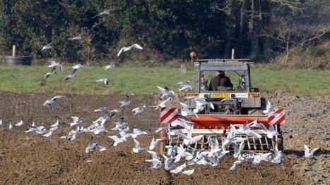 Loi d'avenir agricole. Ce qu'il faut retenir | Agriculture d'Ille-et-Vilaine | Scoop.it