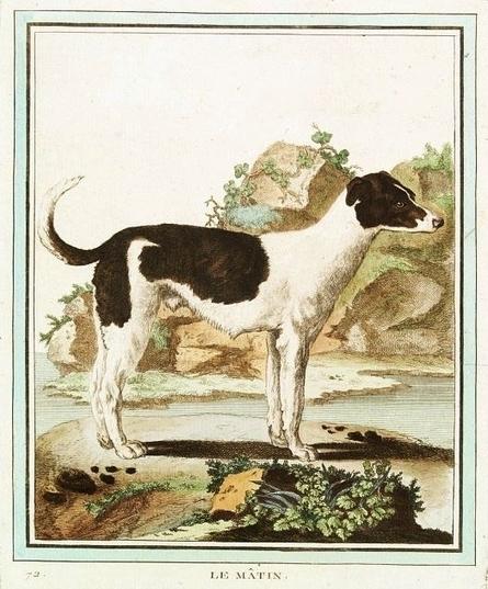 Le chien, histoire d'un objet de compagnie / France Inter | GenealoNet | Scoop.it
