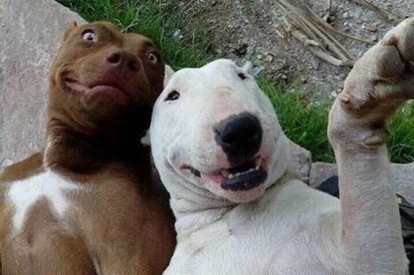 Il selfie degli animali, l'autoscatto ora è anche a quattro zampe (FOTO) - Gossip Fanpage | I love animal | Scoop.it