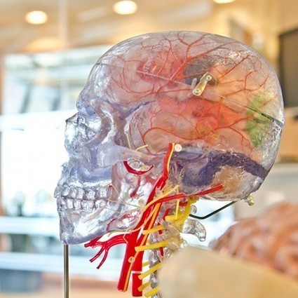 How To Rewire Your Brain To Better Handle Stress - Forbes | Nerd Vittles Daily Dump | Scoop.it