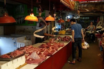 Meat Is Destroying the World   Activism, social justice, citizen movements   Scoop.it