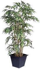 Plantation et culture du Bambou - jardinerie Truffaut conseils Bambous Truffaut | les bambous | Scoop.it