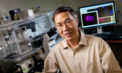 Duke Biomedical Engineer Kam Leong Elected to National Academy of Engineering   Duke Pratt School of Engineering   BioMedical Engineering. The Future of Medicine and Engineering   Scoop.it