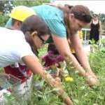 Kids Planting and Harvesting on the Breaking Ground Green Roof ... | Rooftop Permaculture & Biodiversity | Scoop.it