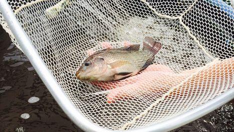 Bleckley County High dips in aquaculture - 13WMAZ   Global Aquaculture News & Events   Scoop.it