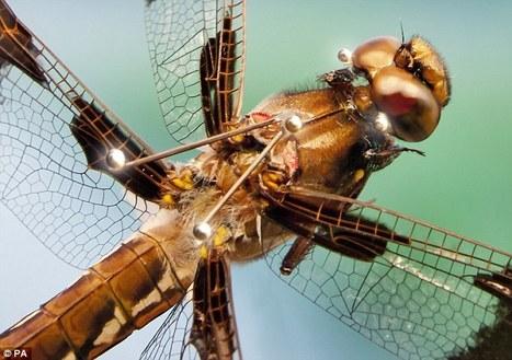 Chasseurs à réaction, pas seulement | EntomoNews | Scoop.it