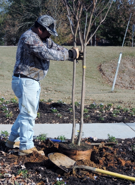 Music Bend Trail receives 20 new trees, thanks to Tupelo Garden Club | Rails to Trails and Food Forests | Scoop.it