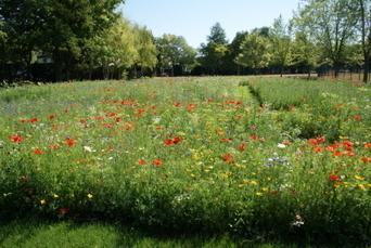Chevigny-Saint-Sauveur : le labyrinthe pédagogique est prêt, ou presque... | Labyrinthes pédagogiques | Scoop.it