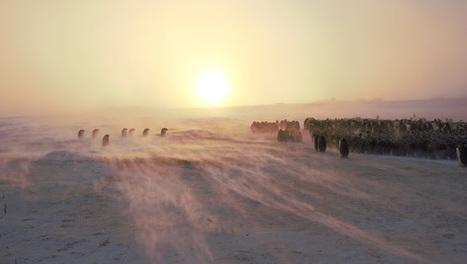 #antarctique #catabatique #manchot empereur : superbes photos #TAAF | Arctique et Antarctique | Scoop.it