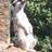 Rhondda Powling