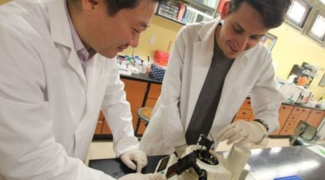 Device Could Speed Diagnosis of Infections   UANews   CALS in the News   Scoop.it
